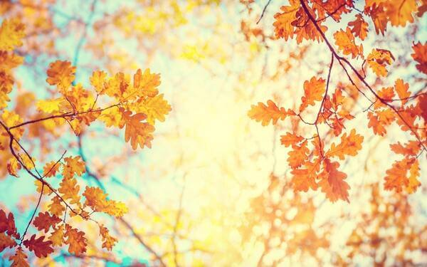 秋の紫外線